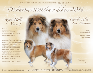 collie_see_the_lights_letacek.png
